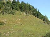 Фауна / Австрия