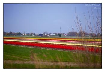 Дорога вдоль поля / Нидерланды