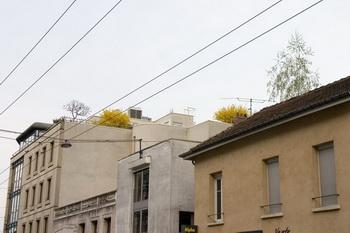 Деревья / Франция