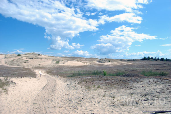Дюна Агилос природного резервата Нагляй / Фото из Литвы