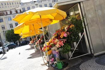Цветы / Португалия