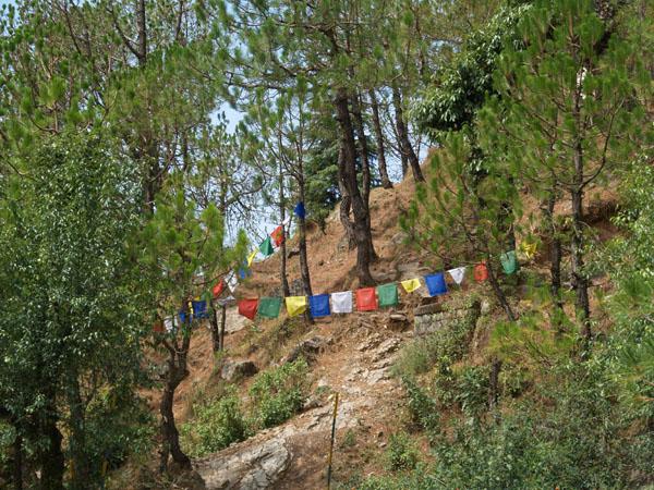 Горный склон в Дармсале / Фото из Индии