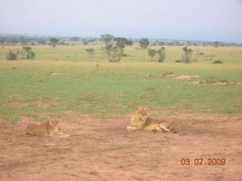 Зверский царь со зверской царицей / Руанда