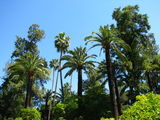 Пальмы в парке / Испания