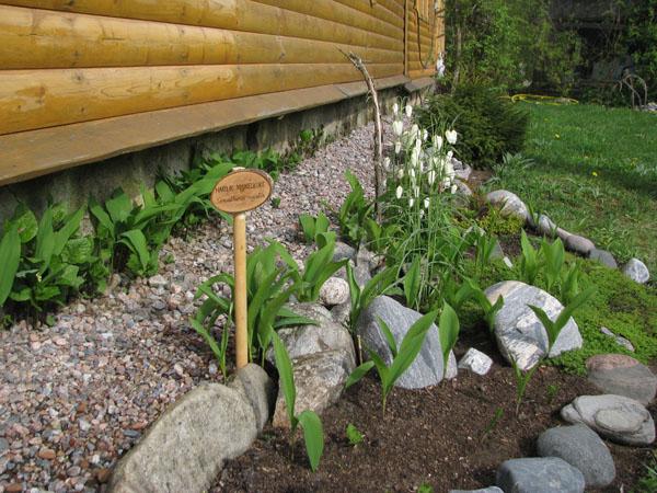 Каждое растение - с поясняющей табличкой, ферма Kuusiku / Фото из Эстонии