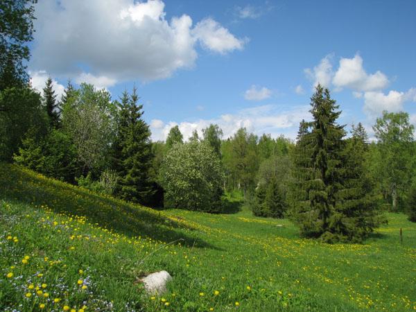 В национальном парке Лаахемаа / Фото из Эстонии