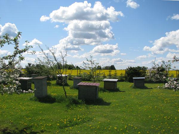 Свежий мед можно попробовать на пасеке одной из ферм в Лаахемаа / Фото из Эстонии