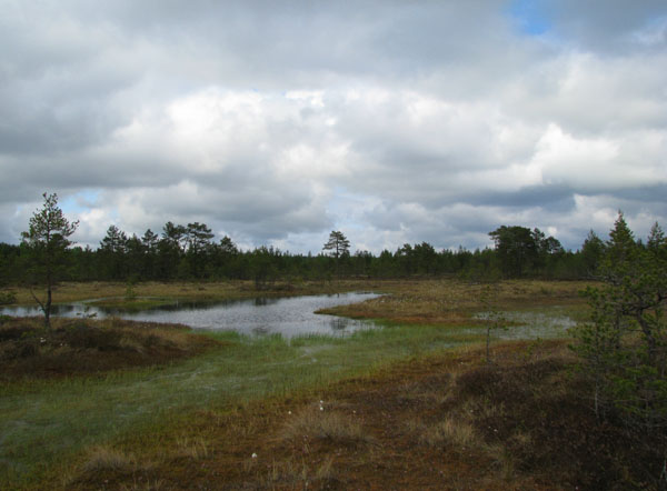 На прогулку по болоту Виру стоит выделить несколько часов / Фото из Эстонии