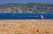 Морская птица / Франция