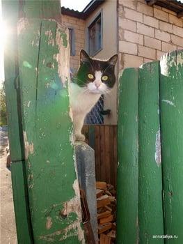 Кошка / Белоруссия
