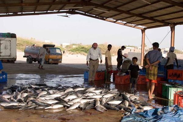 На ужин можно купить свежую рыбу, Аль-Моха / Фото из Йемена