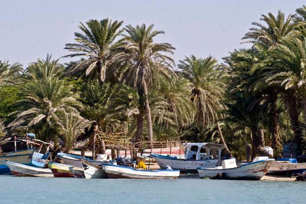 Рыбацкие лодки в Аль-Мохе, Йемен / Фото из Йемена