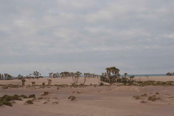 Пустынный песчаный берег, Аль-Моха / Фото из Йемена