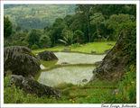 Рисовое земледелие / Индонезия