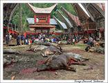 Массовый забой скота / Индонезия