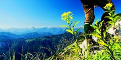 Нижняя Австрия предлагает разнообразные виды отдыха. // lackenhof.at