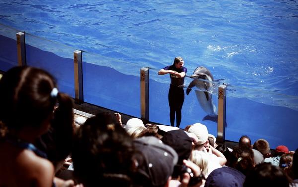 Тематический парк SeaWorld в Сан-Диего / Фото из США