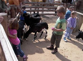 Дети играют с животными / Чехия