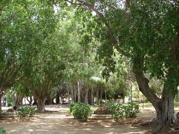 Сад Гарибальди в Палермо, Сицилия / Фото из Италии