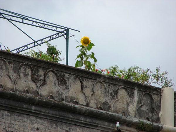 Крыша одного из домов в Палермо, Сицилия / Фото из Италии