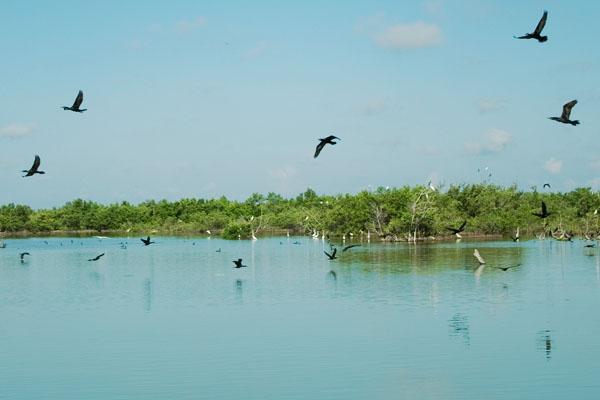 Лас-Салинас - дом для самых разных птиц / Фото с Кубы