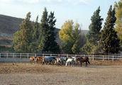 Ruta de toros, ╚дорога быков╩ / Испания