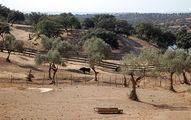 Оливковые и пробковые деревья / Испания