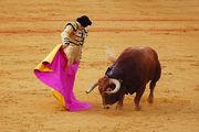 Бой быков / Испания