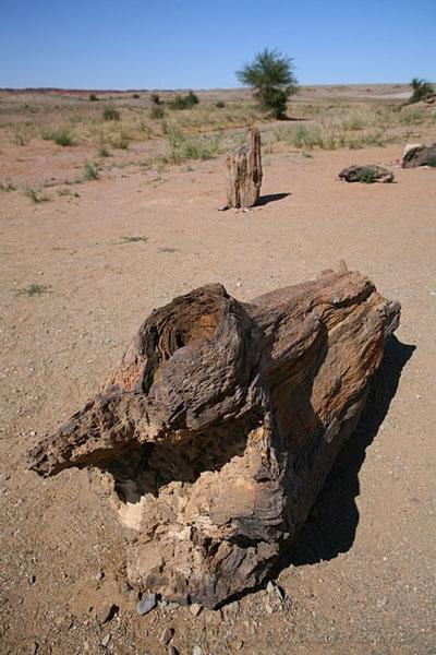 Окаменелости в пустыне Гоби, Монголия / Фото из Монголии
