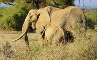 Слоны / Кения