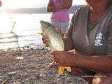 Рыба / Узбекистан