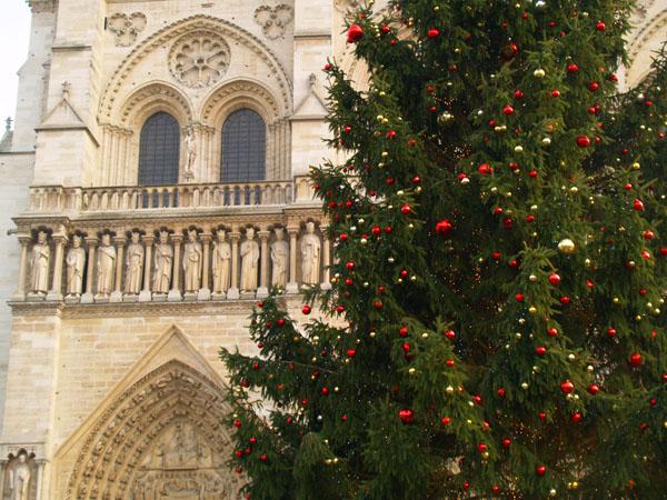 Рождественская елка перед собором Нотр-Дам, Париж / Фото из Франции