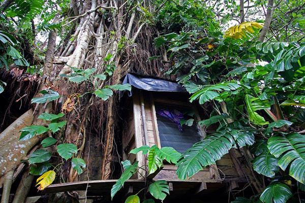 Домик внутри огромного баньяна, Вануату / Фото из Вануату