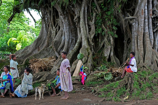 Баньян - своеобразный центр общественной жизни в Вануату / Фото из Вануату