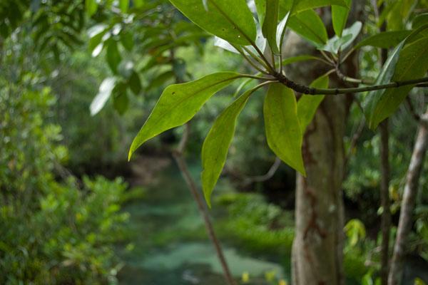 Уникальный лес окутан мифами и легендами, маршрут Tha Pom Khlong Song Nam / Фото из Таиланда