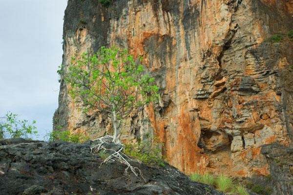 Утесы и скалы привлекают в Краби скалолазов / Фото из Таиланда