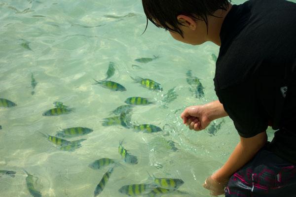 Ручные рыбки у острова Пода / Фото из Таиланда