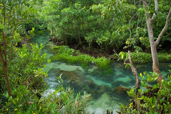 Вмешательство в окружающий природный мир строго запрещено, Краби / Фото из Таиланда