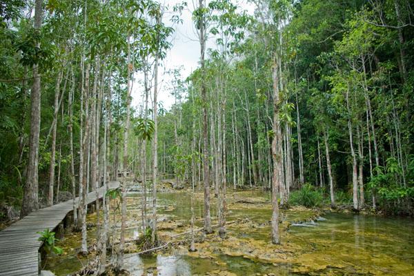 Туристические маршруты у Изумрудного озера очень живописны, Краби / Фото из Таиланда