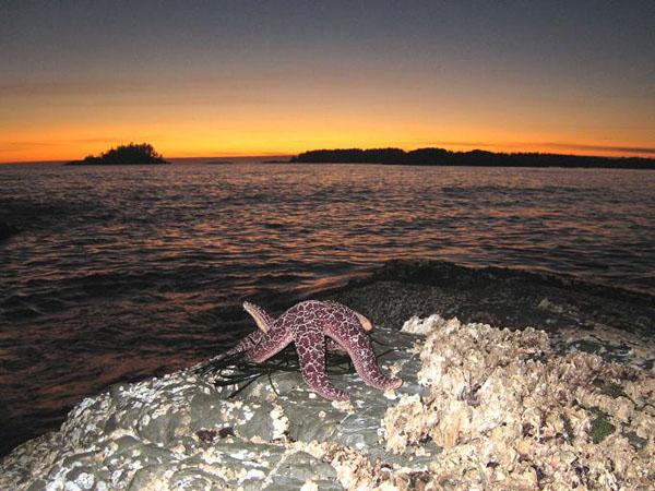 Закат на пляже Long Beach на острове Ванкувер / Фото из Канады