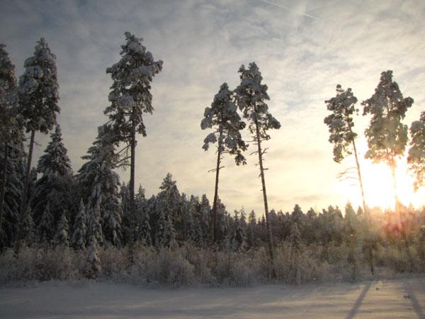 Безмятежная Эстония - подходящее место для оздоровительного отдыха круглый год / Фото из Эстонии