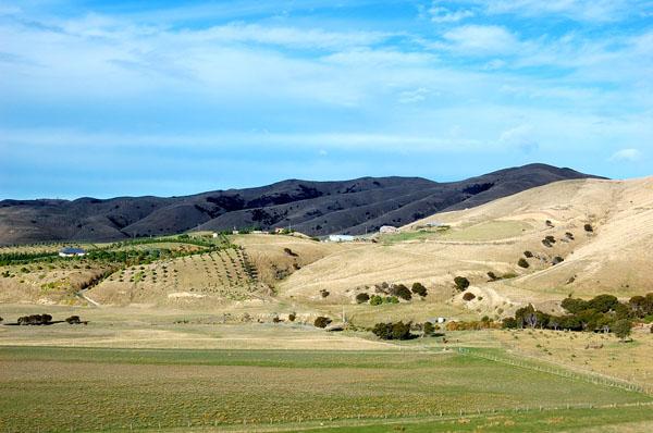 Южный остров гораздо более холмистый, чем Северный / Фото из Новой Зеландии