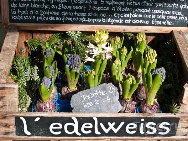 На витрине цветочного магазина в Шамбери / Фото из Франции