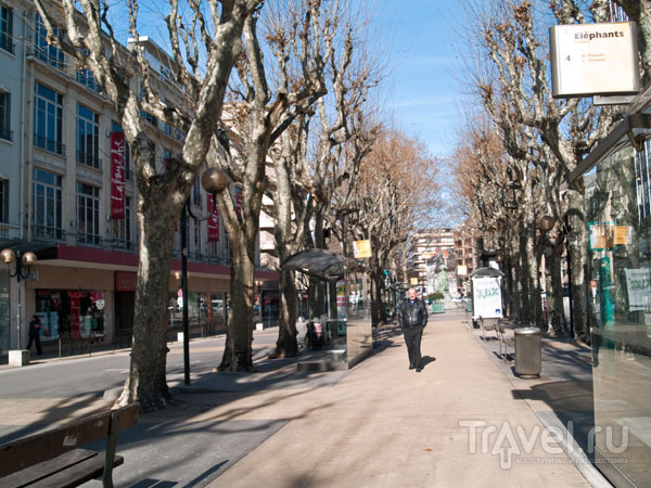 Платановая аллея в центре Шамбери / Фото из Франции