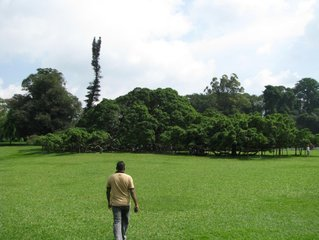 Ботанический сад / Шри-Ланка