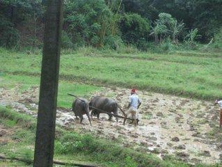 Аграрное хозяйство / Шри-Ланка