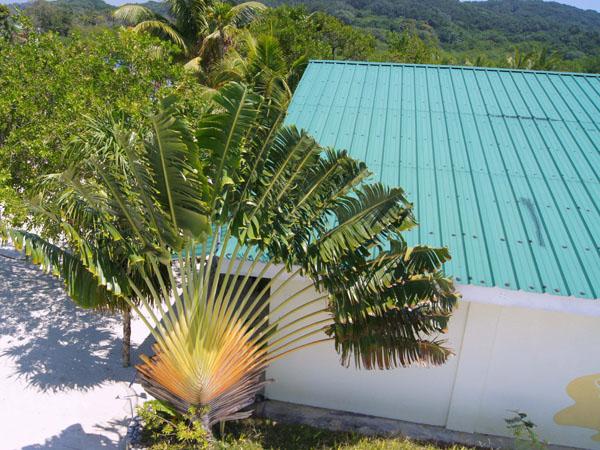 Эта плоская пальма была похожа на веер, Роатан / Фото из Мексики