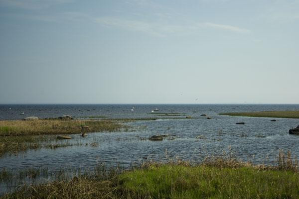 Побережье острова Кихну / Фото из Эстонии