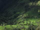 В долине / Колумбия
