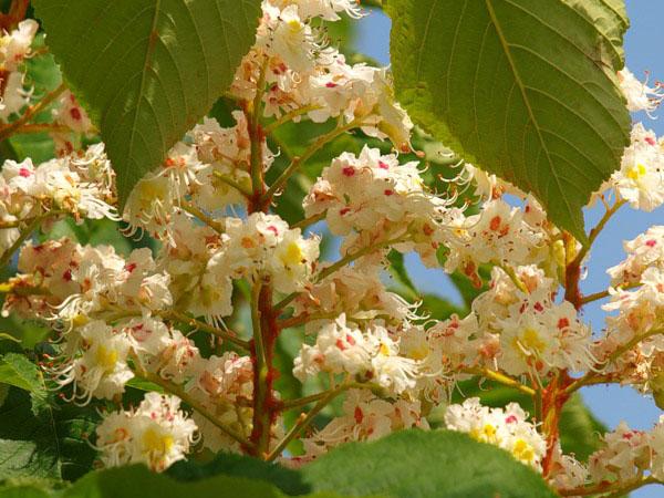 Цветы украшают в мае всю Болгарию / Фото из Болгарии